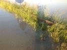Hochwasser 2013_35